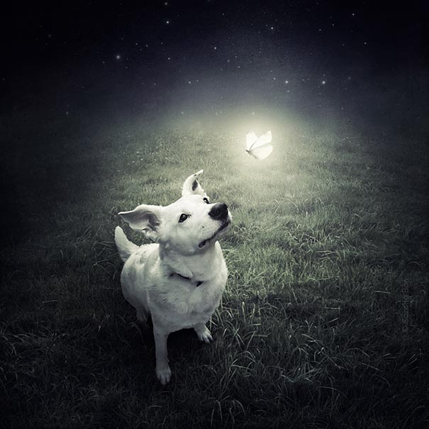 surreal-photoshop-images-shelter-animals-sarolta-ban-1