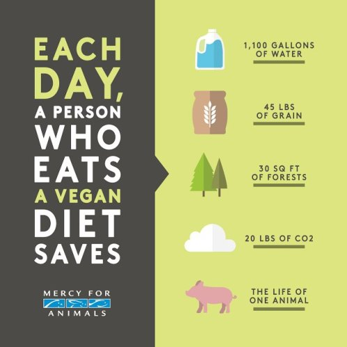 mercyforanimals-daily-feeding