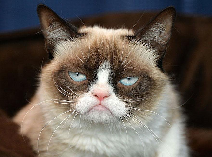 most-popular-cats-grumpy-cat-4
